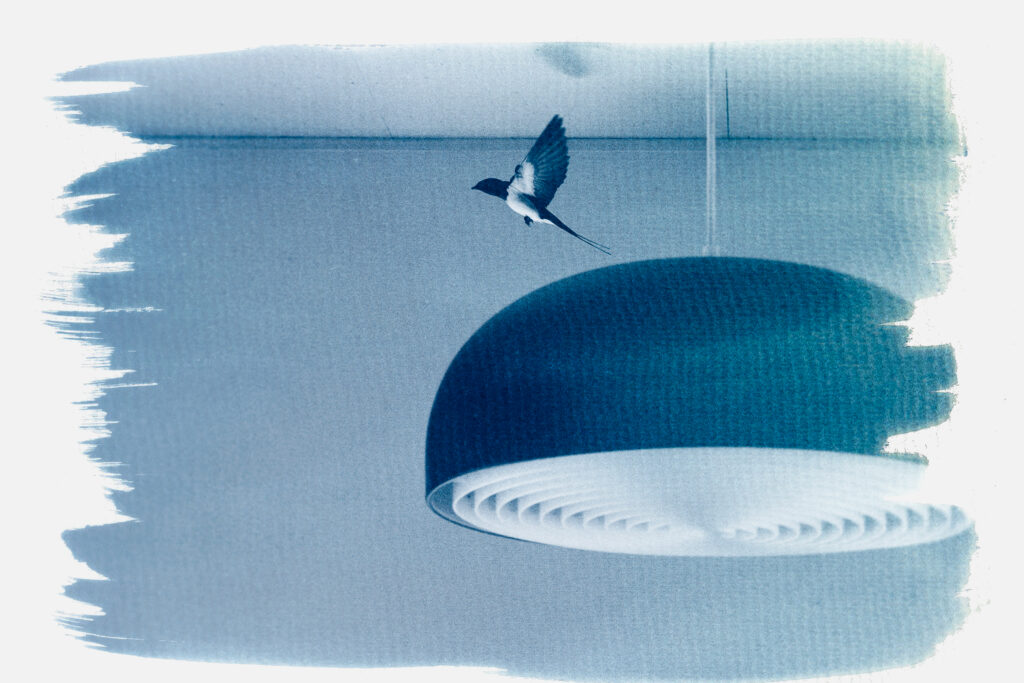 Cyanotypie Kunstdruck von Martin Schachenhofer.