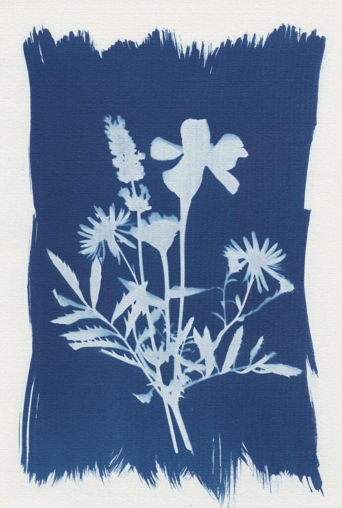 Pflanzen Kunstdruck mittels Cyanotypie Fotodruck. Workshop von Martin Schachenhofer.